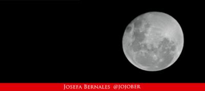 Gato Típico Chileno ¿La luna fue realmente de un chileno?