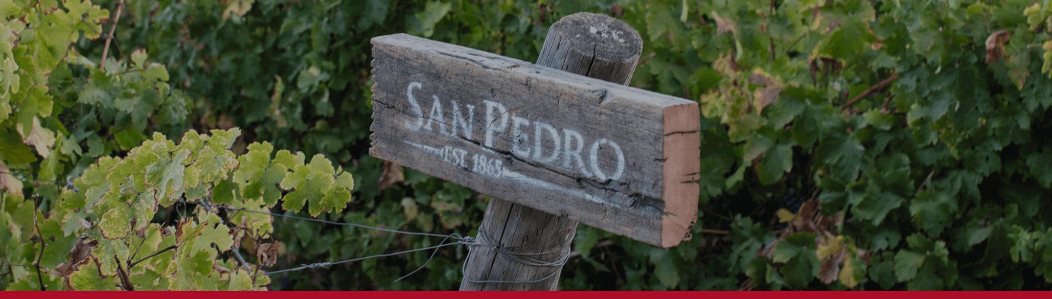 Viña San Pedro | Vino Gato