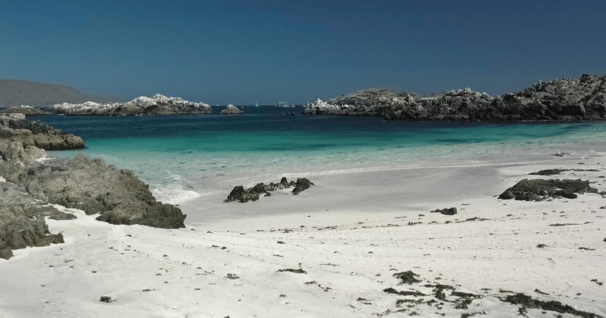 Bahía Inglesa | Vino Gato