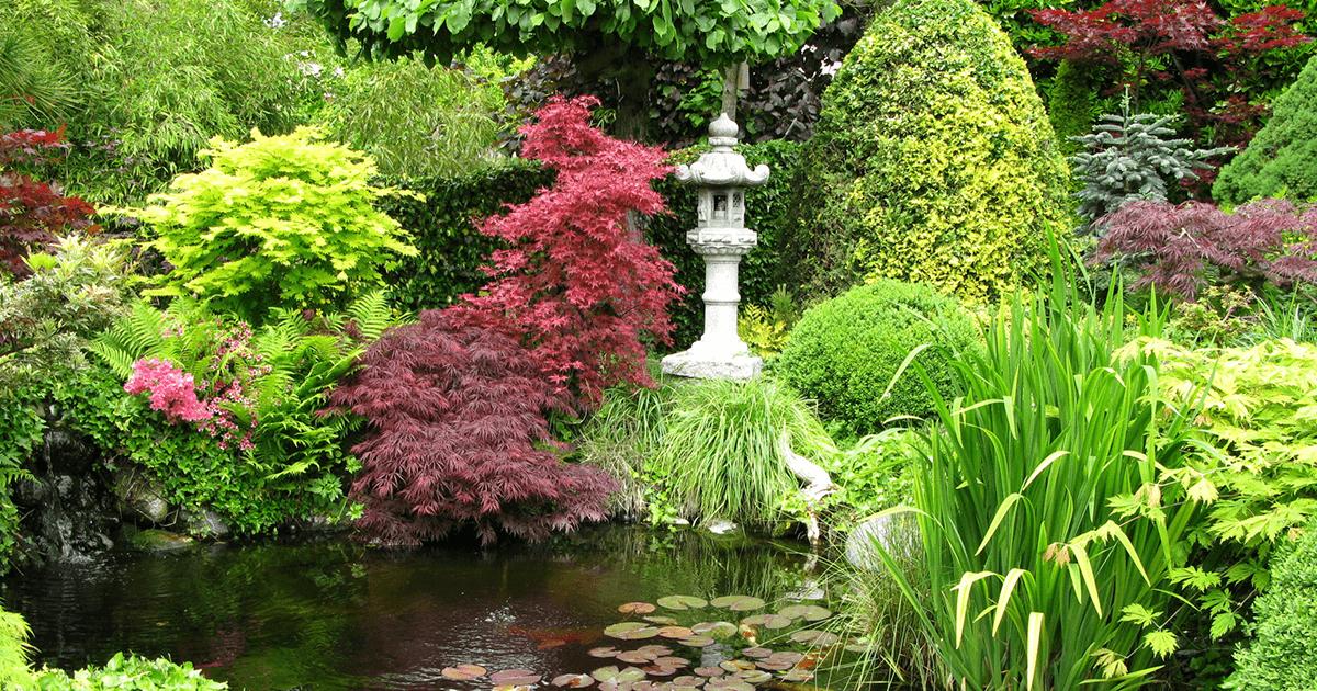 Jardín Japonés | Vino Gato