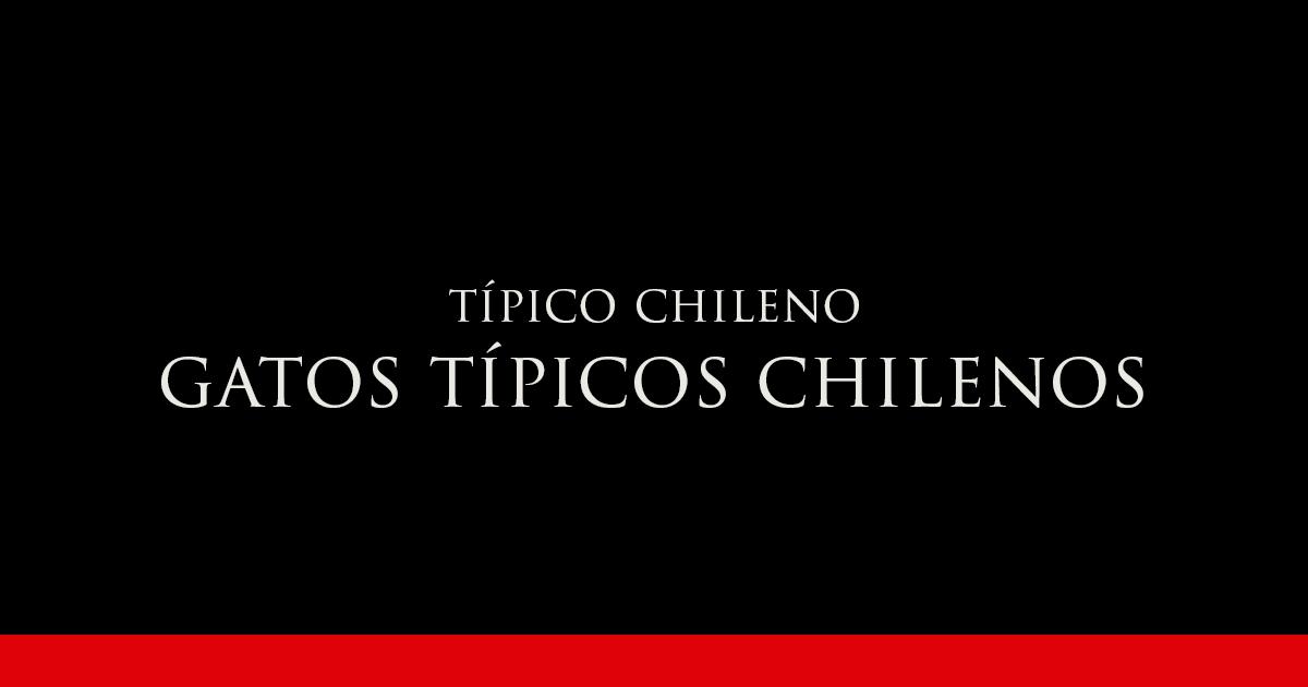 GATOS TÍPICOS CHILENOS | Vino Gato
