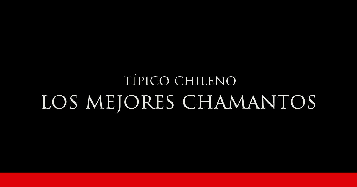 Gato Típico Chileno ¿DÓNDE ESTÁN LOS MEJORES CHAMANTOS?