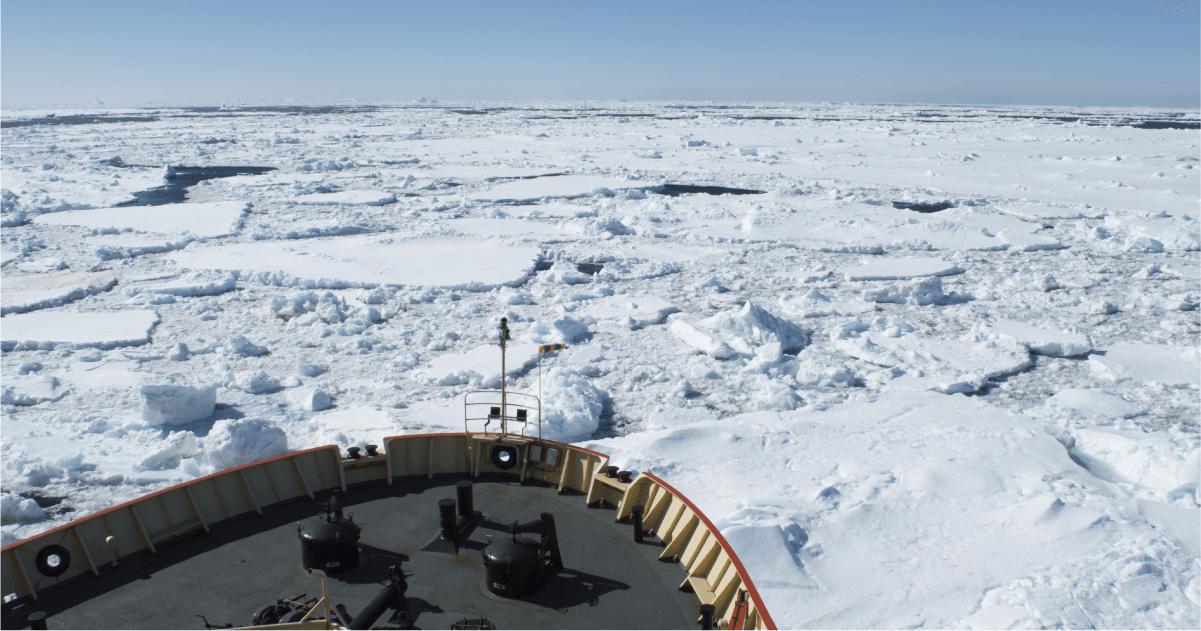 Odisea en la Antártica | Vino Gato